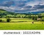 sheeps grazing on green pasture ... | Shutterstock . vector #1022142496