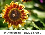 flower  wallpaper  garden ...   Shutterstock . vector #1022157052