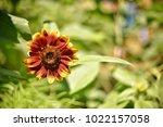 flower  wallpaper  garden ...   Shutterstock . vector #1022157058
