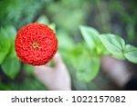 flower  wallpaper  garden ...   Shutterstock . vector #1022157082