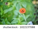 flower  wallpaper  garden ...   Shutterstock . vector #1022157088