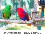 Stock photo the big beautiful parrot very much decorates with himself the nature 1022158432