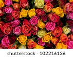 Colorful Roses Background....