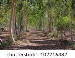 Eucalypt Rainforest