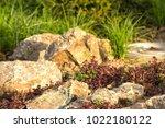 a plot of summer landscaped... | Shutterstock . vector #1022180122
