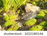a plot of summer landscaped... | Shutterstock . vector #1022180146