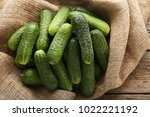 fresh cucumbers with sackcloth... | Shutterstock . vector #1022221192