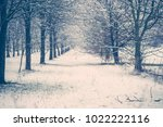 forest with tree lined avenue... | Shutterstock . vector #1022222116