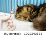 a cat sleeping with fever  was... | Shutterstock . vector #1022243836