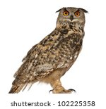 Stock photo portrait of eurasian eagle owl bubo bubo a species of eagle owl standing in front of white 102225358