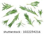fresh green rosemary isolated... | Shutterstock . vector #1022254216