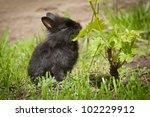 Rabbit baby bunny in green grass - stock photo