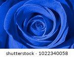 Blue Rose Background  Macro...