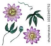 passioflora illustration...   Shutterstock . vector #1022345752