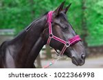 hippodrome brown head horse in... | Shutterstock . vector #1022366998