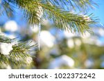 snow covered pine branch with... | Shutterstock . vector #1022372242