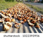 areca nuts are dissected in... | Shutterstock . vector #1022393956