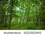 forest. green tree in the wood. ... | Shutterstock . vector #1022502442