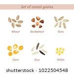 vector set of cereal grains... | Shutterstock .eps vector #1022504548