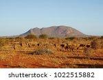 a herd of antelopes in tsavo... | Shutterstock . vector #1022515882