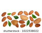 almonds with leaves isolated on ... | Shutterstock . vector #1022538022