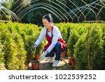 beautiful senior woman gardener ... | Shutterstock . vector #1022539252