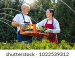 senior couple farming at garden ... | Shutterstock . vector #1022539312