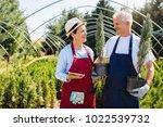 senior couple of gardeners...   Shutterstock . vector #1022539732