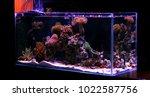display saltwater coral reef... | Shutterstock . vector #1022587756
