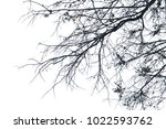 isolated tree on white... | Shutterstock . vector #1022593762