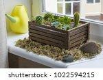 home mini succulent and cactus... | Shutterstock . vector #1022594215