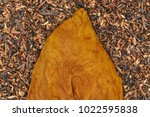 Small photo of Tobacco dry leaf on Tobacco dry background