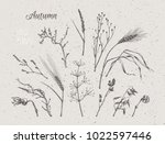 autumn plants  ears of rye  ... | Shutterstock .eps vector #1022597446