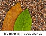 Tobacco dry leaf and tobacco...