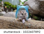 close up of a tiny hamster in a ... | Shutterstock . vector #1022607892