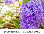 beautyful purple wreath vine or ... | Shutterstock . vector #1022643952