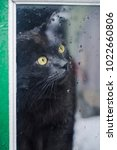 cat looking out rainy window.... | Shutterstock . vector #1022660806