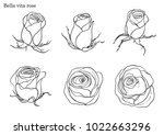 rose vector set by hand drawing.... | Shutterstock .eps vector #1022663296