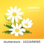 cartoon camomile card poster... | Shutterstock .eps vector #1022698585