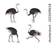 Cartoon Ostrich Gray Bird Set...