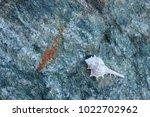 shells on gray stone  the sea... | Shutterstock . vector #1022702962