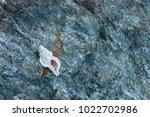 shells on gray stone  the sea... | Shutterstock . vector #1022702986