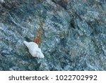 shells on gray stone  the sea... | Shutterstock . vector #1022702992
