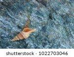 shells on gray stone  the sea... | Shutterstock . vector #1022703046