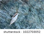 shells on gray stone  the sea... | Shutterstock . vector #1022703052