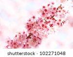 sakura flowers line | Shutterstock . vector #102271048