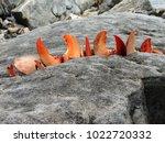 Small photo of Maine Crustacean Art