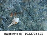 shells on gray stone  the sea... | Shutterstock . vector #1022736622