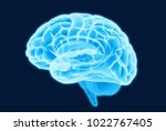 3d blue light glowing brain... | Shutterstock . vector #1022767405