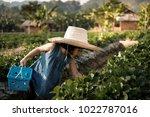 little girl keeps strawberry... | Shutterstock . vector #1022787016